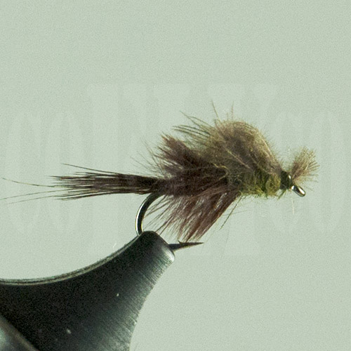 Blue Wing Olive Captive Dun Harrop