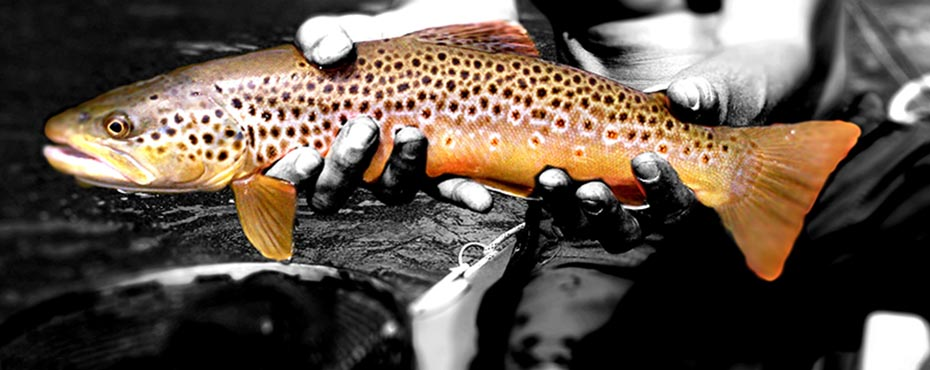 colorado fly company | high quality fishing flies at discount prices, Fly Fishing Bait
