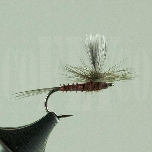 Mahogany Parachute Biot Body Harrop