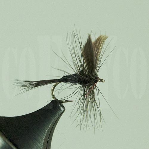 Black Gnat Skykomish