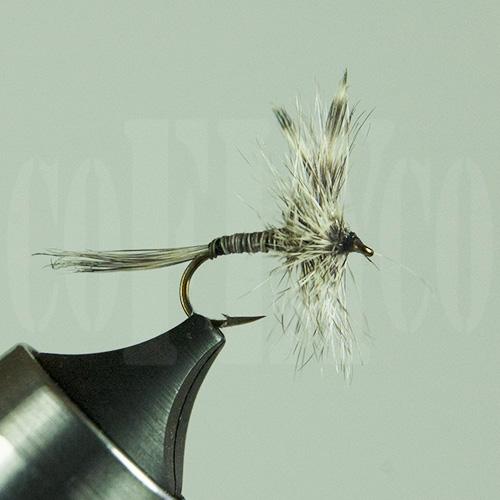 Mosquito Skykomish