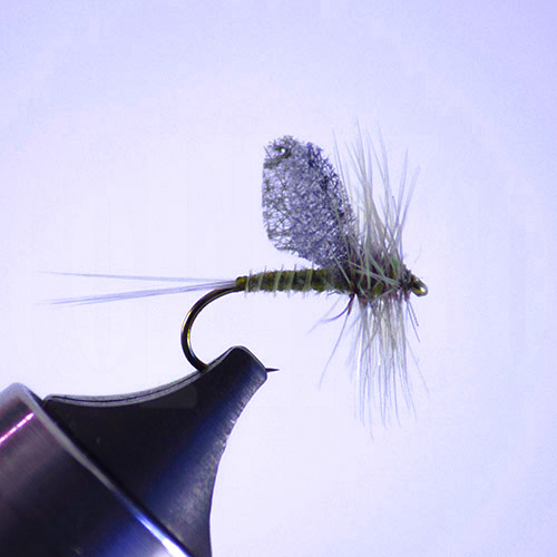 Blue Wing Olive Cut Wing