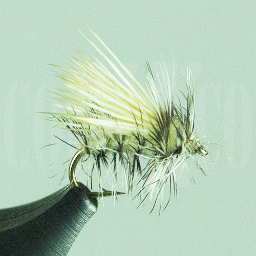 Caddis Little Stoney
